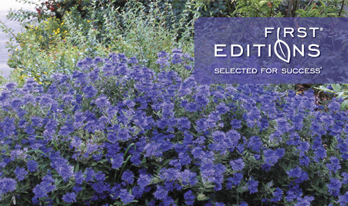 First Editions® Plants