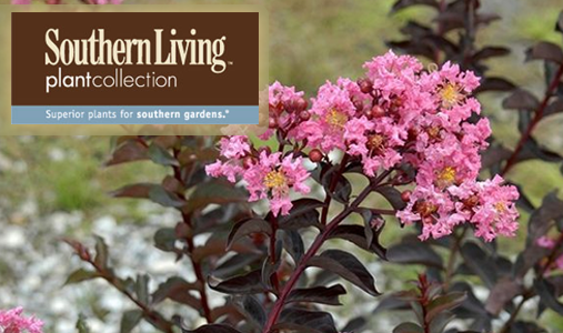 Southern Living® Plants